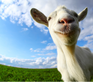 PAN - Happy Goat
